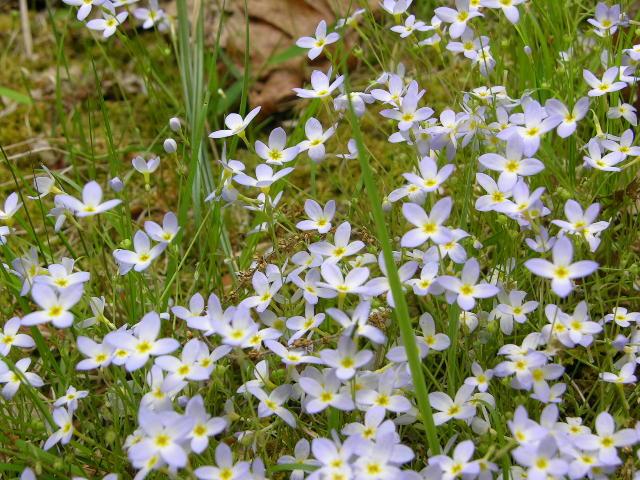 Violetblue Flowers